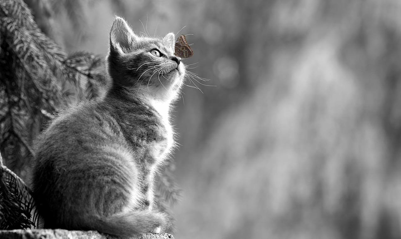Il gattino e la farfalla.